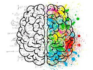 полушарии мозга