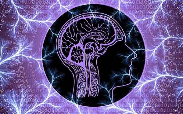 схематический рисунок мозга
