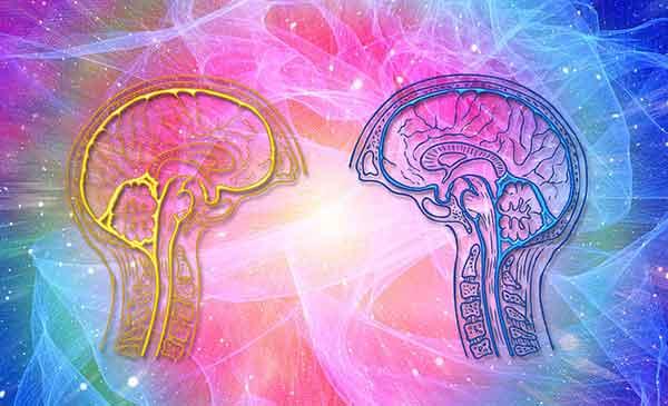 2 стилизованных мозга